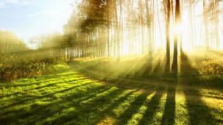Может ли человек питаться Солнцем?