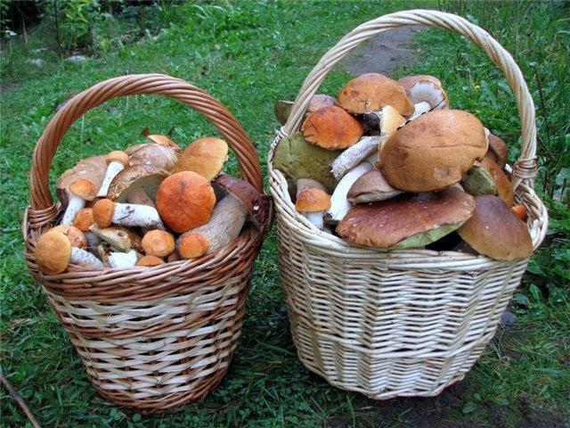 Целебные свойства грибов: лисички подавляют размножение стафилококков, а маслята лечат головную боль 14