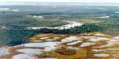 Загадки торфяных болот